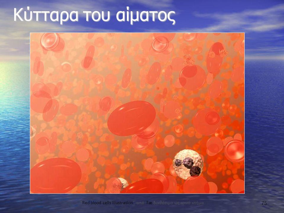 Κύτταρα του αίματος Red blood cells illustration , από Fæ διαθέσιμο ως κοινό κτήμα 75