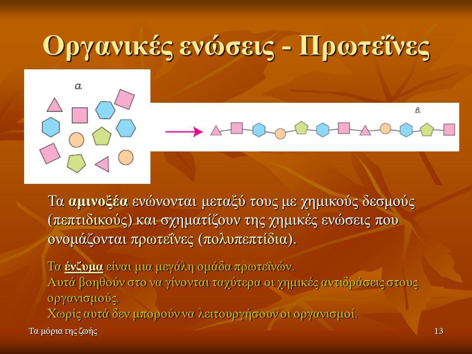 Τα μόρια της ζωής13 Οργανικές ενώσεις - Πρωτεΐνες Τα αμινοξέα ενώνονται μεταξύ τους με χημικούς δεσμούς (πεπτιδικούς) και σχηματίζουν της χημικές ενώσεις που ονομάζονται πρωτεΐνες (πολυπεπτίδια).