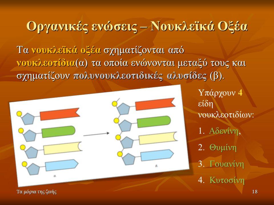 Τα μόρια της ζωής18 Οργανικές ενώσεις – Νουκλεϊκά Οξέα Τα νουκλεϊκά οξέα σχηματίζονται από νουκλεοτίδια(α) τα οποία ενώνονται μεταξύ τους και σχηματίζουν πολυνουκλεοτιδικές αλυσίδες (β).