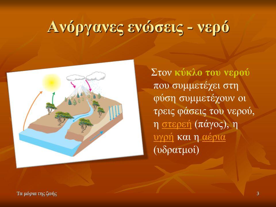Τα μόρια της ζωής3 Ανόργανες ενώσεις - νερό Στον κύκλο του νερού που συμμετέχει στη φύση συμμετέχουν οι τρεις φάσεις του νερού, η στερεή (πάγος), η υγρή και η αέρια (υδρατμοί)