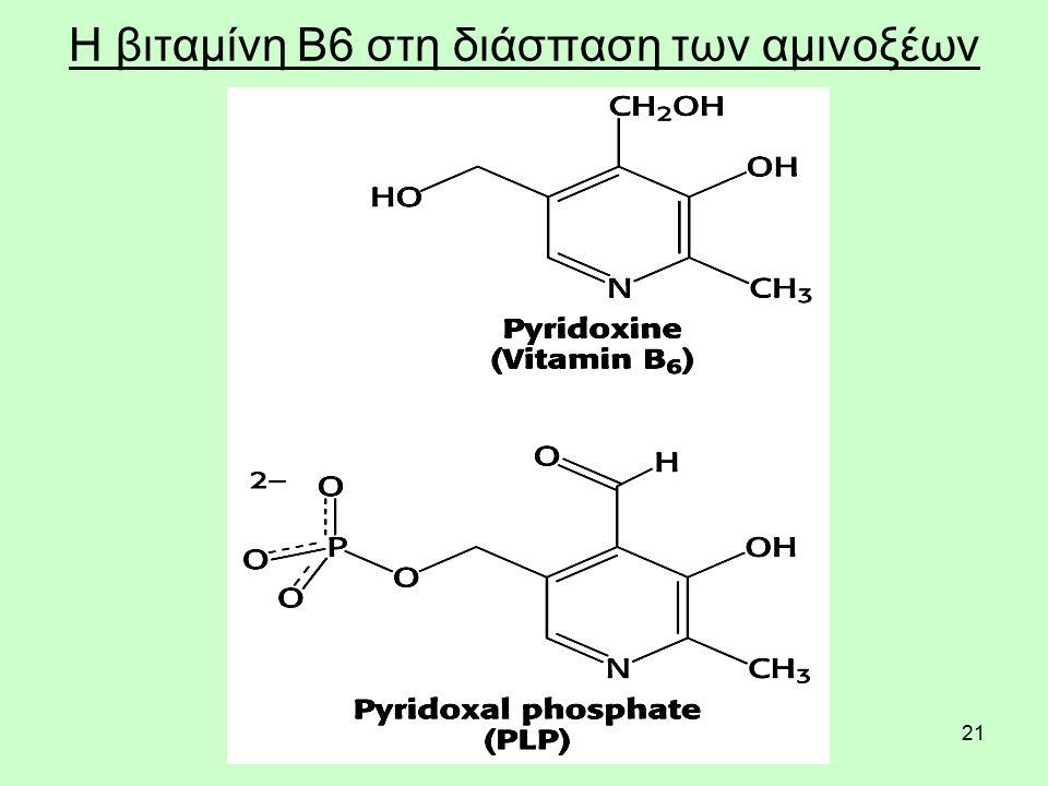 21 Η βιταμίνη Β6 στη διάσπαση των αμινοξέων