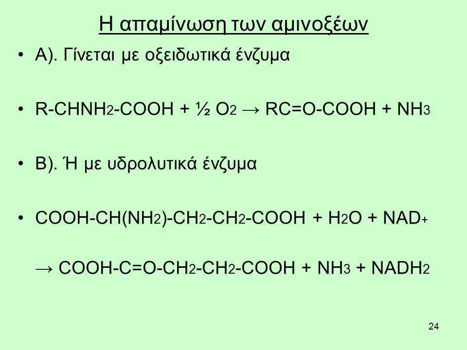 24 Η απαμίνωση των αμινοξέων Α). Γίνεται με οξειδωτικά ένζυμα R-CHNH 2 -COOH + ½ O 2 → RC=O-COOH + NH 3 Β). Ή με υδρολυτικά ένζυμα COOH-CH(NH 2 )-CH 2