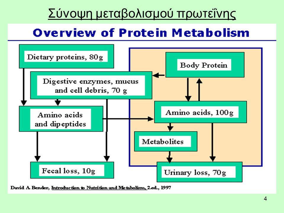 4 Σύνοψη μεταβολισμού πρωτεΐνης