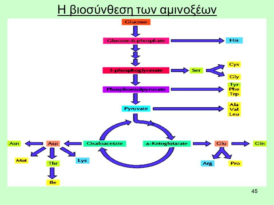 45 Η βιοσύνθεση των αμινοξέων