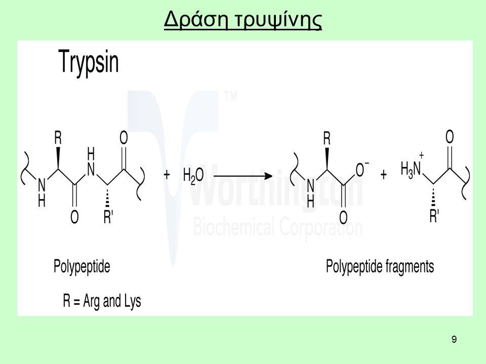 50 Συμπληρωματικές πρωτεΐνες Τα φασόλια για παράδειγμα δεν έχουν επαρκή ποσά θειούχων αμινοξέων, την ίδια στιγμή που το σταρένιο ψωμί δεν έχει την κατάλληλη ποσότητα του αμινοξέος λυσίνη.