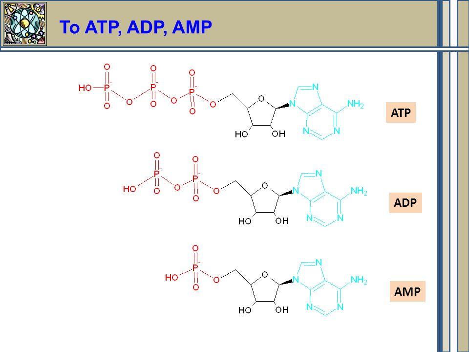 Το ΑΤΡ, ADP, AMP ATP ADP AMP
