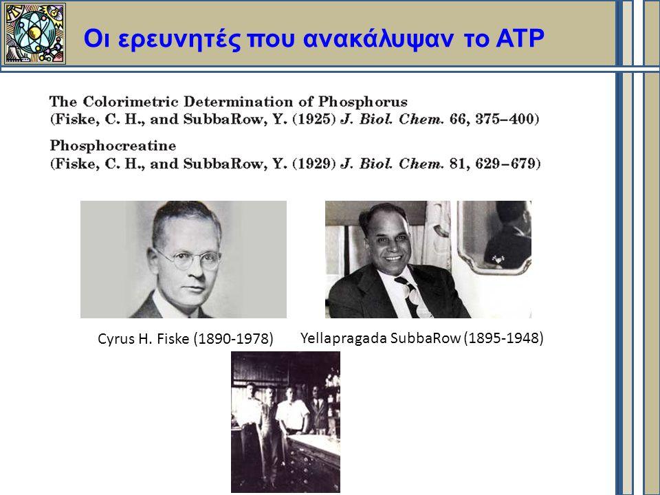 Οι ερευνητές που ανακάλυψαν το ΑΤΡ Cyrus H. Fiske (1890-1978) Yellapragada SubbaRow (1895-1948)