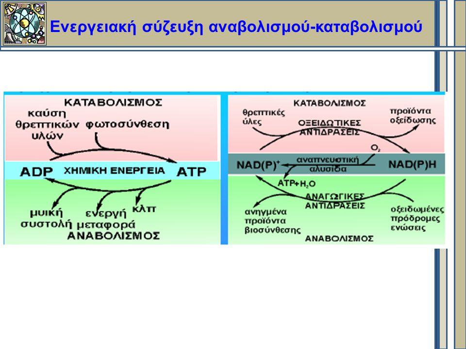 Ενεργειακή σύζευξη αναβολισμού-καταβολισμού