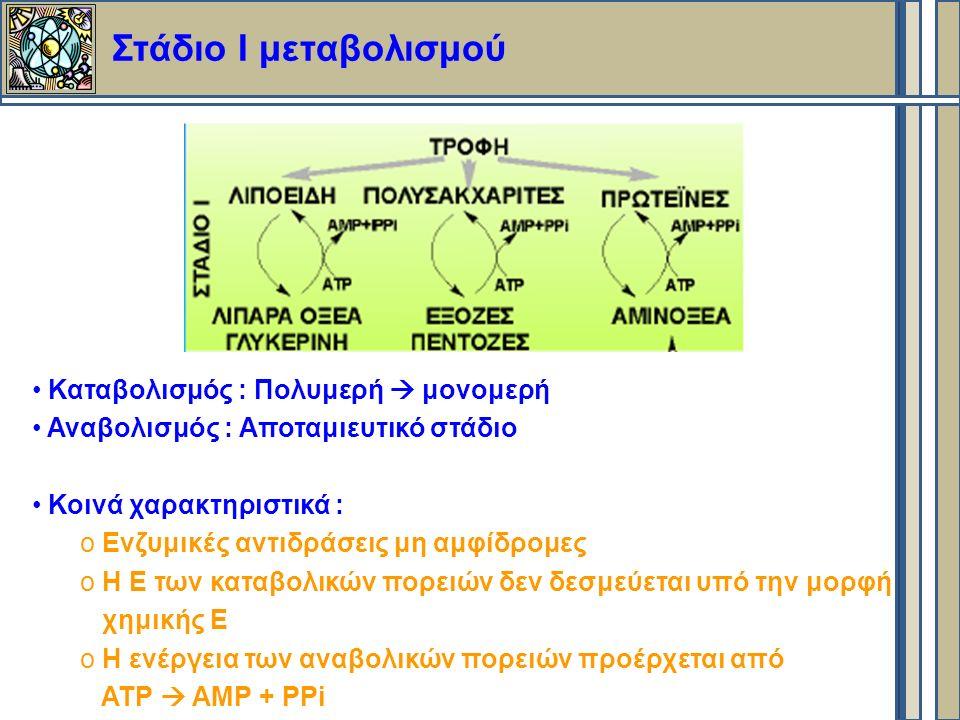 Στάδιο Ι μεταβολισμού Καταβολισμός : Πολυμερή  μονομερή Αναβολισμός : Αποταμιευτικό στάδιο Κοινά χαρακτηριστικά : o Ενζυμικές αντιδράσεις μη αμφίδρομες o Η Ε των καταβολικών πορειών δεν δεσμεύεται υπό την μορφή χημικής Ε o Η ενέργεια των αναβολικών πορειών προέρχεται από ΑΤΡ  ΑΜΡ + ΡΡi