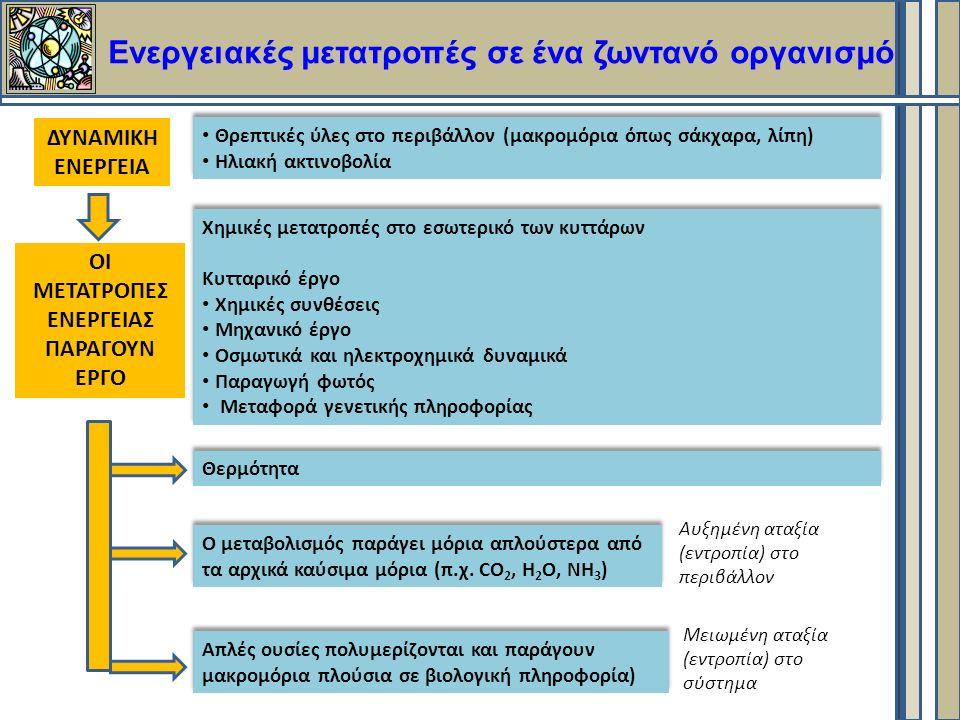 Ενεργειακές μετατροπές σε ένα ζωντανό οργανισμό Θρεπτικές ύλες στο περιβάλλον (μακρομόρια όπως σάκχαρα, λίπη) Ηλιακή ακτινοβολία Θρεπτικές ύλες στο περιβάλλον (μακρομόρια όπως σάκχαρα, λίπη) Ηλιακή ακτινοβολία Χημικές μετατροπές στο εσωτερικό των κυττάρων Κυτταρικό έργο Χημικές συνθέσεις Μηχανικό έργο Οσμωτικά και ηλεκτροχημικά δυναμικά Παραγωγή φωτός Μεταφορά γενετικής πληροφορίας Χημικές μετατροπές στο εσωτερικό των κυττάρων Κυτταρικό έργο Χημικές συνθέσεις Μηχανικό έργο Οσμωτικά και ηλεκτροχημικά δυναμικά Παραγωγή φωτός Μεταφορά γενετικής πληροφορίας Θερμότητα Ο μεταβολισμός παράγει μόρια απλούστερα από τα αρχικά καύσιμα μόρια (π.χ.