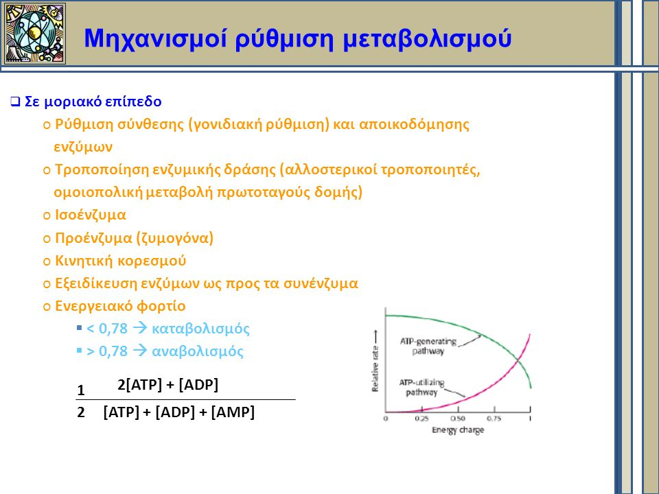 Μηχανισμοί ρύθμιση μεταβολισμού  Σε μοριακό επίπεδο o Ρύθμιση σύνθεσης (γονιδιακή ρύθμιση) και αποικοδόμησης ενζύμων o Τροποποίηση ενζυμικής δράσης (αλλοστερικοί τροποποιητές, ομοιοπολική μεταβολή πρωτοταγούς δομής) o Ισοένζυμα o Προένζυμα (ζυμογόνα) o Κινητική κορεσμού o Εξειδίκευση ενζύμων ως προς τα συνένζυμα o Ενεργειακό φορτίο  < 0,78  καταβολισμός  > 0,78  αναβολισμός 2[ΑΤP] + [ADP] [ATP] + [ADP] + [AMP] 1 2