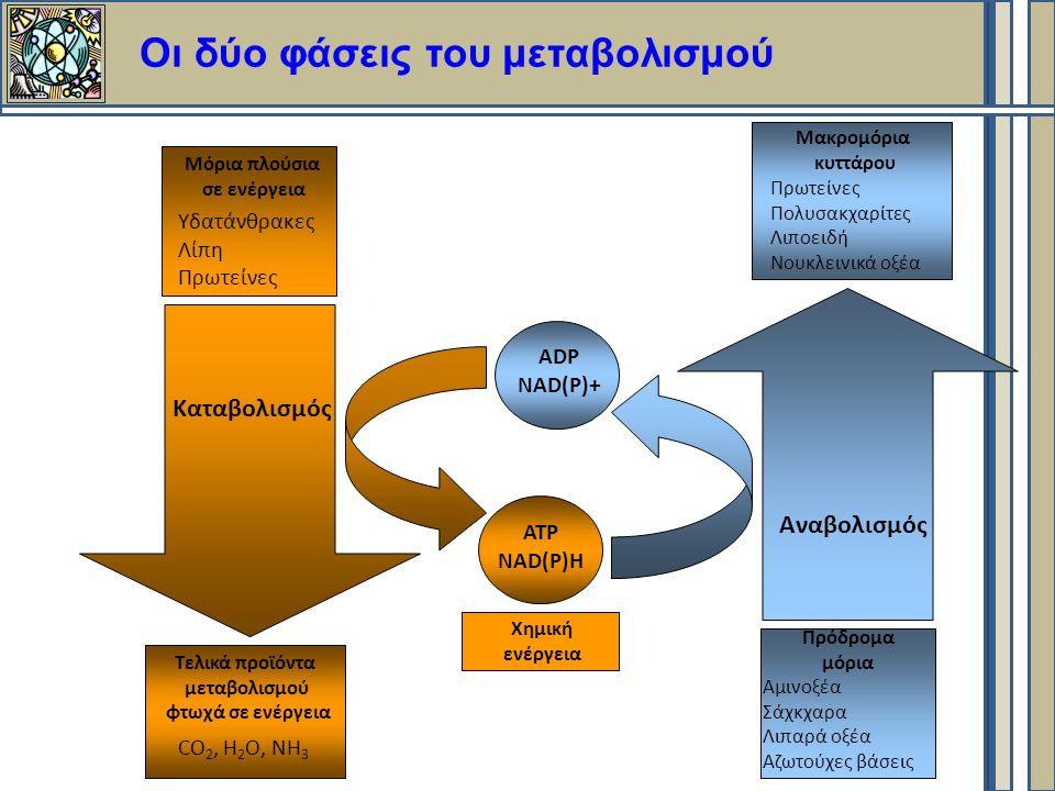 Οι δύο φάσεις του μεταβολισμού Καταβολισμός Αναβολισμός Μόρια πλούσια σε ενέργεια Υδατάνθρακες Λίπη Πρωτείνες Τελικά προϊόντα μεταβολισμού φτωχά σε ενέργεια CO 2, H 2 O, NH 3 Μακρομόρια κυττάρου Πρωτείνες Πολυσακχαρίτες Λιποειδή Νουκλεινικά οξέα Πρόδρομα μόρια Aμινοξέα Σάχκχαρα Λιπαρά οξέα Αζωτούχες βάσεις ATP NAD(P)H ADP NAD(P)+ Χημική ενέργεια