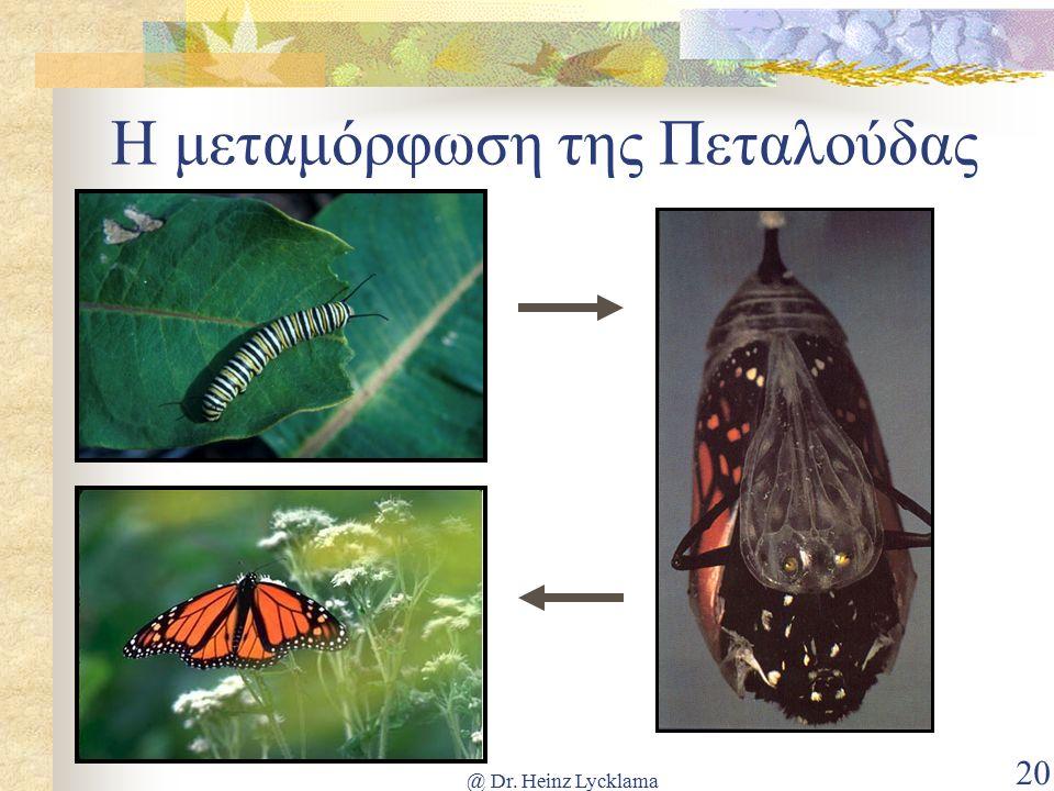@ Dr. Heinz Lycklama 20 Η μεταμόρφωση της Πεταλούδας