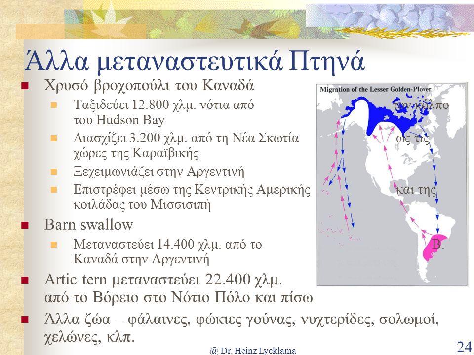 @ Dr. Heinz Lycklama 24 Άλλα μεταναστευτικά Πτηνά Χρυσό βροχοπούλι του Καναδά Ταξιδεύει 12.800 χλμ.