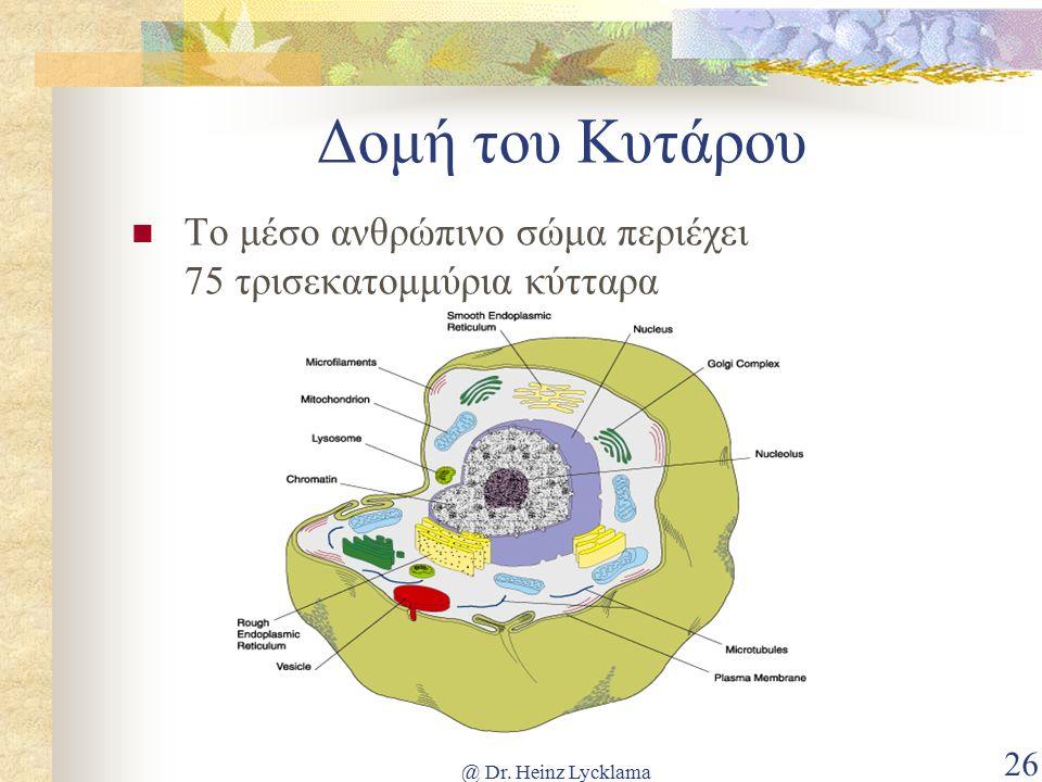@ Dr. Heinz Lycklama 26 Δομή του Κυτάρου Το μέσο ανθρώπινο σώμα περιέχει 75 τρισεκατομμύρια κύτταρα
