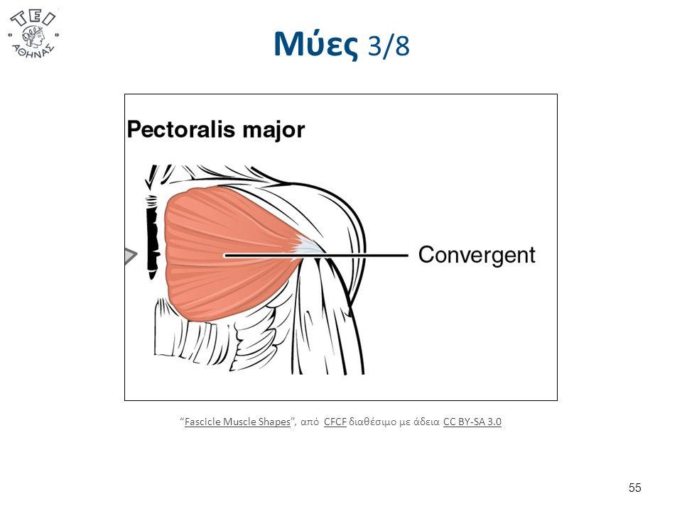 Μύες 3/8 55 Fascicle Muscle Shapes , από CFCF διαθέσιμο με άδεια CC BY-SA 3.0Fascicle Muscle ShapesCFCFCC BY-SA 3.0