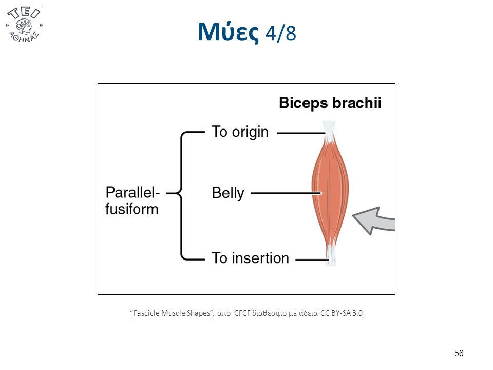 Μύες 4/8 56 Fascicle Muscle Shapes , από CFCF διαθέσιμο με άδεια CC BY-SA 3.0Fascicle Muscle ShapesCFCFCC BY-SA 3.0