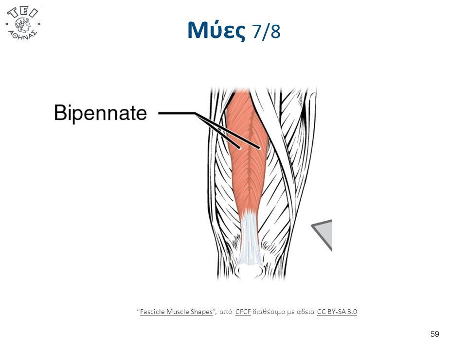 Μύες 7/8 59 Fascicle Muscle Shapes , από CFCF διαθέσιμο με άδεια CC BY-SA 3.0Fascicle Muscle ShapesCFCFCC BY-SA 3.0
