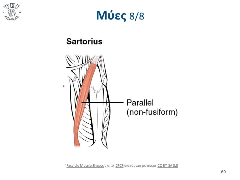 Μύες 8/8 60 Fascicle Muscle Shapes , από CFCF διαθέσιμο με άδεια CC BY-SA 3.0Fascicle Muscle ShapesCFCFCC BY-SA 3.0