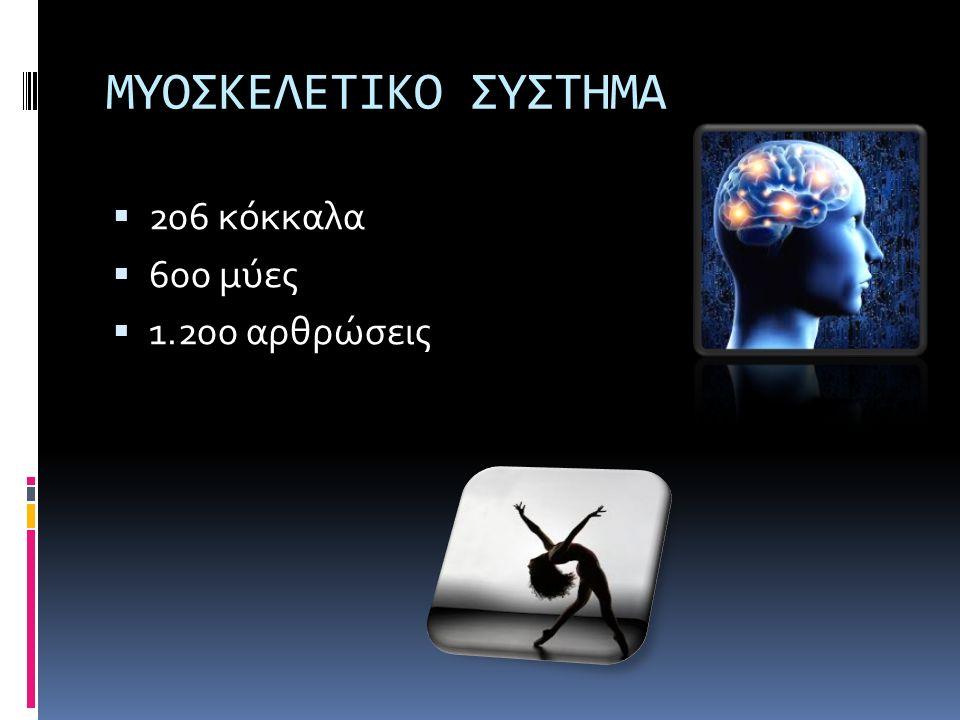 ΜΥΟΣΚΕΛΕΤΙΚΟ ΣΥΣΤΗΜΑ  206 κόκκαλα  600 μύες  1.200 αρθρώσεις