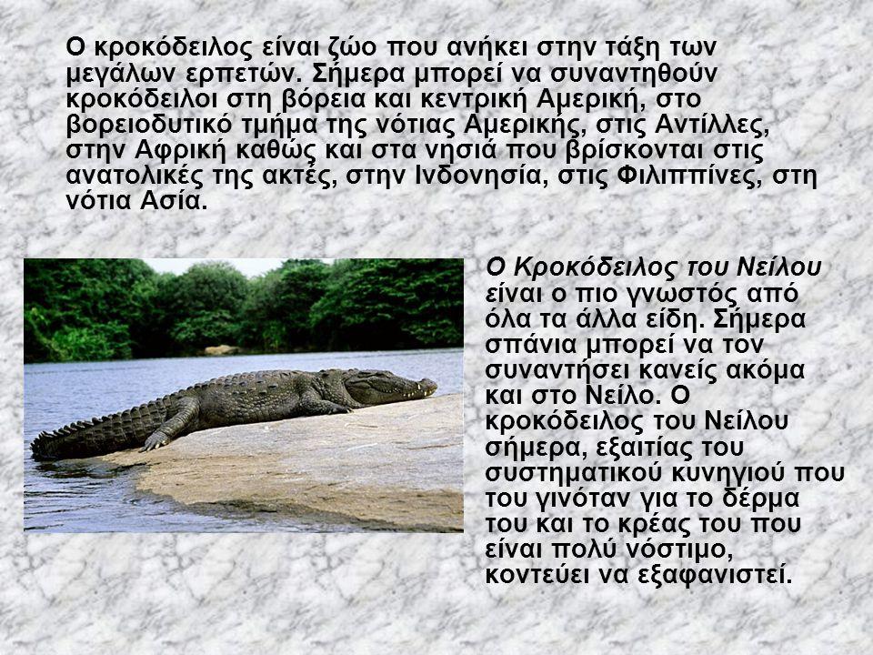 Ο κροκόδειλος είναι ζώο που ανήκει στην τάξη των μεγάλων ερπετών. Σήμερα μπορεί να συναντηθούν κροκόδειλοι στη βόρεια και κεντρική Αμερική, στο βορειο