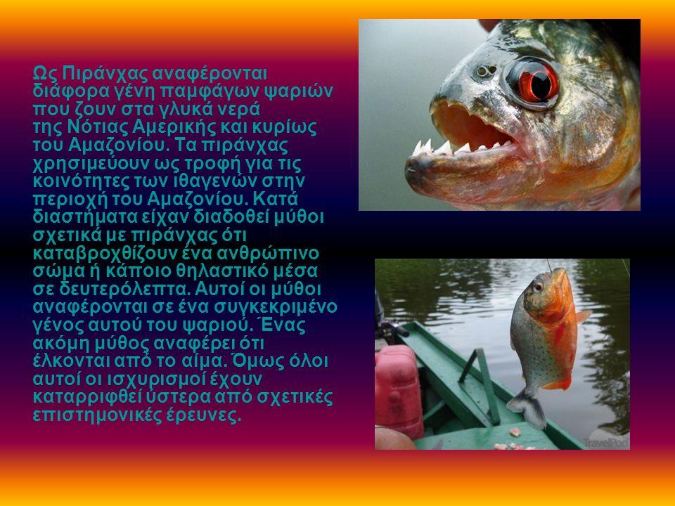 Ως Πιράνχας αναφέρονται διάφορα γένη παμφάγων ψαριών που ζουν στα γλυκά νερά της Νότιας Αμερικής και κυρίως του Αμαζονίου. Τα πιράνχας χρησιμεύουν ως