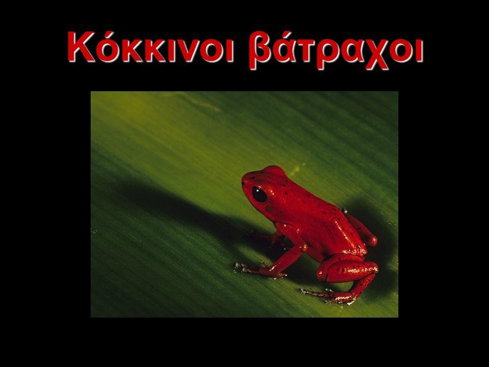 Κόκκινοι βάτραχοι
