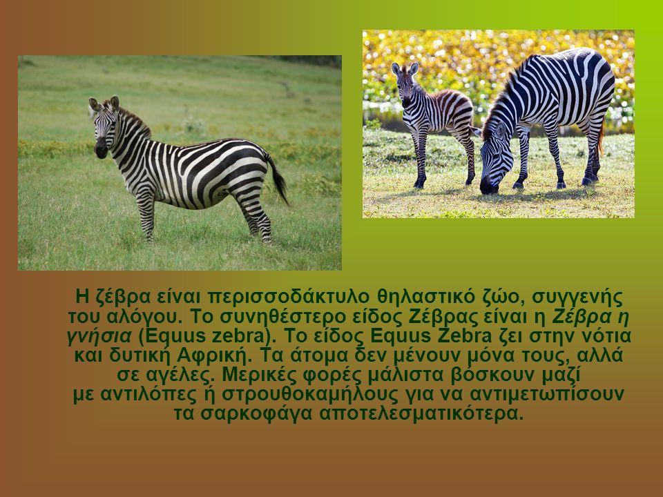 Η ζέβρα είναι περισσοδάκτυλο θηλαστικό ζώο, συγγενής του αλόγου. Το συνηθέστερο είδος Ζέβρας είναι η Ζέβρα η γνήσια (Equus zebra). Το είδος Equus Zebr