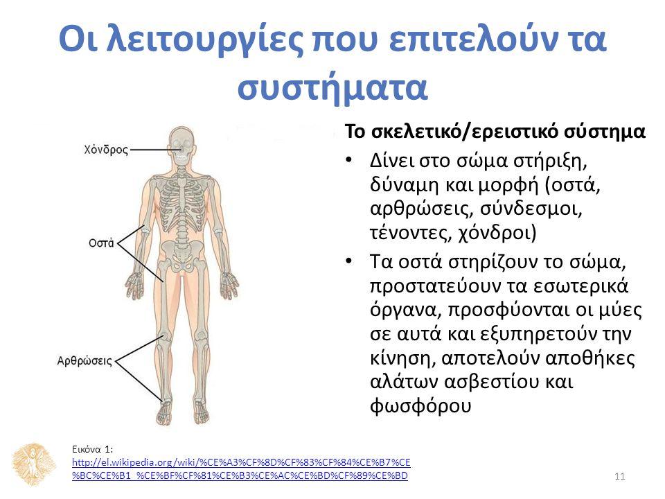 Οι λειτουργίες που επιτελούν τα συστήματα Το σκελετικό/ερειστικό σύστημα Δίνει στο σώμα στήριξη, δύναμη και μορφή (οστά, αρθρώσεις, σύνδεσμοι, τένοντες, χόνδροι) Τα οστά στηρίζουν το σώμα, προστατεύουν τα εσωτερικά όργανα, προσφύονται οι μύες σε αυτά και εξυπηρετούν την κίνηση, αποτελούν αποθήκες αλάτων ασβεστίου και φωσφόρου 11 Εικόνα 1: http://el.wikipedia.org/wiki/%CE%A3%CF%8D%CF%83%CF%84%CE%B7%CE %BC%CE%B1_%CE%BF%CF%81%CE%B3%CE%AC%CE%BD%CF%89%CE%BD http://el.wikipedia.org/wiki/%CE%A3%CF%8D%CF%83%CF%84%CE%B7%CE %BC%CE%B1_%CE%BF%CF%81%CE%B3%CE%AC%CE%BD%CF%89%CE%BD