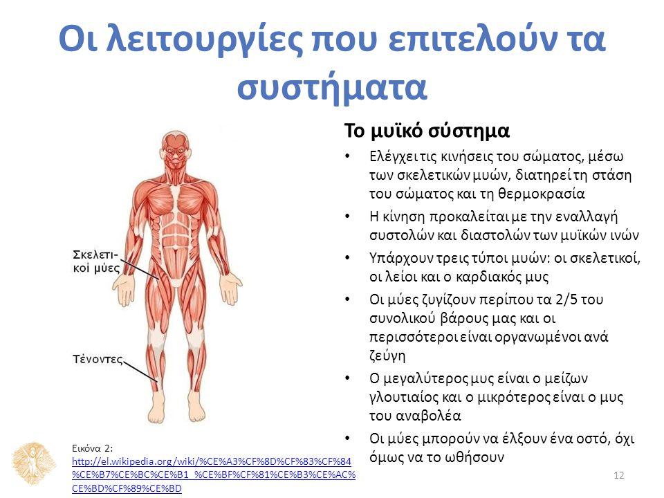 Το μυϊκό σύστημα Ελέγχει τις κινήσεις του σώματος, μέσω των σκελετικών μυών, διατηρεί τη στάση του σώματος και τη θερμοκρασία Η κίνηση προκαλείται με την εναλλαγή συστολών και διαστολών των μυϊκών ινών Υπάρχουν τρεις τύποι μυών: οι σκελετικοί, οι λείοι και ο καρδιακός μυς Οι μύες ζυγίζουν περίπου τα 2/5 του συνολικού βάρους μας και οι περισσότεροι είναι οργανωμένοι ανά ζεύγη Ο μεγαλύτερος μυς είναι ο μείζων γλουτιαίος και ο μικρότερος είναι ο μυς του αναβολέα Οι μύες μπορούν να έλξουν ένα οστό, όχι όμως να το ωθήσουν 12 Οι λειτουργίες που επιτελούν τα συστήματα Εικόνα 2: http://el.wikipedia.org/wiki/%CE%A3%CF%8D%CF%83%CF%84 %CE%B7%CE%BC%CE%B1_%CE%BF%CF%81%CE%B3%CE%AC% CE%BD%CF%89%CE%BD http://el.wikipedia.org/wiki/%CE%A3%CF%8D%CF%83%CF%84 %CE%B7%CE%BC%CE%B1_%CE%BF%CF%81%CE%B3%CE%AC% CE%BD%CF%89%CE%BD