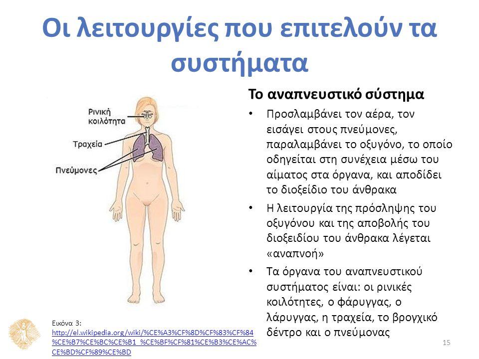 Το αναπνευστικό σύστημα Προσλαμβάνει τον αέρα, τον εισάγει στους πνεύμονες, παραλαμβάνει το οξυγόνο, το οποίο οδηγείται στη συνέχεια μέσω του αίματος στα όργανα, και αποδίδει το διοξείδιο του άνθρακα Η λειτουργία της πρόσληψης του οξυγόνου και της αποβολής του διοξειδίου του άνθρακα λέγεται «αναπνοή» Τα όργανα του αναπνευστικού συστήματος είναι: οι ρινικές κοιλότητες, ο φάρυγγας, ο λάρυγγας, η τραχεία, το βρογχικό δέντρο και ο πνεύμονας 15 Οι λειτουργίες που επιτελούν τα συστήματα Εικόνα 3: http://el.wikipedia.org/wiki/%CE%A3%CF%8D%CF%83%CF%84 %CE%B7%CE%BC%CE%B1_%CE%BF%CF%81%CE%B3%CE%AC% CE%BD%CF%89%CE%BD http://el.wikipedia.org/wiki/%CE%A3%CF%8D%CF%83%CF%84 %CE%B7%CE%BC%CE%B1_%CE%BF%CF%81%CE%B3%CE%AC% CE%BD%CF%89%CE%BD