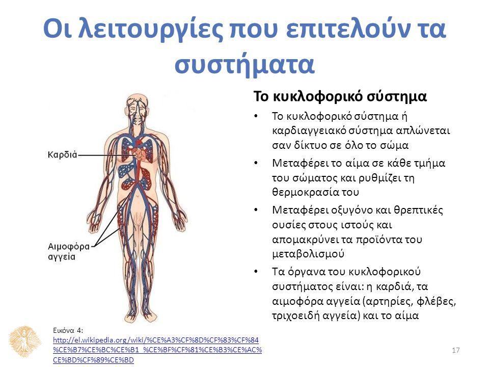 Το κυκλοφορικό σύστημα Το κυκλοφορικό σύστημα ή καρδιαγγειακό σύστημα απλώνεται σαν δίκτυο σε όλο το σώμα Μεταφέρει το αίμα σε κάθε τμήμα του σώματος και ρυθμίζει τη θερμοκρασία του Μεταφέρει οξυγόνο και θρεπτικές ουσίες στους ιστούς και απομακρύνει τα προϊόντα του μεταβολισμού Τα όργανα του κυκλοφορικού συστήματος είναι: η καρδιά, τα αιμοφόρα αγγεία (αρτηρίες, φλέβες, τριχοειδή αγγεία) και το αίμα 17 Οι λειτουργίες που επιτελούν τα συστήματα Εικόνα 4: http://el.wikipedia.org/wiki/%CE%A3%CF%8D%CF%83%CF%84 %CE%B7%CE%BC%CE%B1_%CE%BF%CF%81%CE%B3%CE%AC% CE%BD%CF%89%CE%BD http://el.wikipedia.org/wiki/%CE%A3%CF%8D%CF%83%CF%84 %CE%B7%CE%BC%CE%B1_%CE%BF%CF%81%CE%B3%CE%AC% CE%BD%CF%89%CE%BD