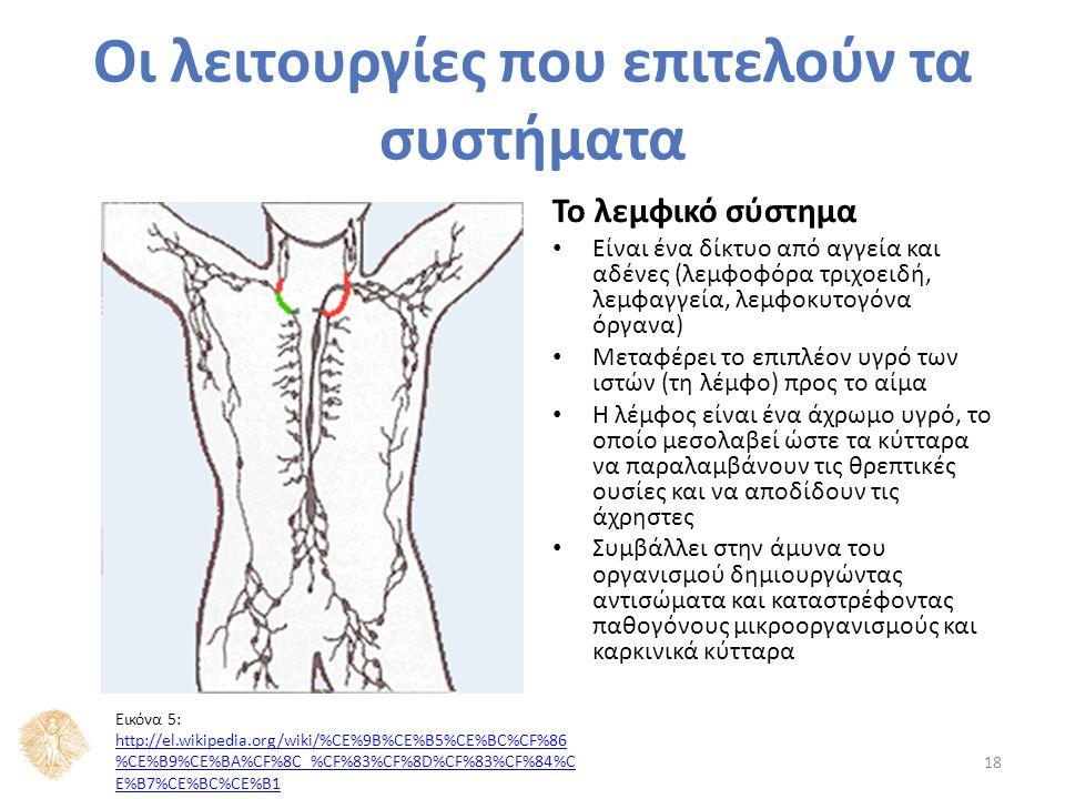 Το λεμφικό σύστημα Είναι ένα δίκτυο από αγγεία και αδένες (λεμφοφόρα τριχοειδή, λεμφαγγεία, λεμφοκυτογόνα όργανα) Μεταφέρει το επιπλέον υγρό των ιστών (τη λέμφο) προς το αίμα Η λέμφος είναι ένα άχρωμο υγρό, το οποίο μεσολαβεί ώστε τα κύτταρα να παραλαμβάνουν τις θρεπτικές ουσίες και να αποδίδουν τις άχρηστες Συμβάλλει στην άμυνα του οργανισμού δημιουργώντας αντισώματα και καταστρέφοντας παθογόνους μικροοργανισμούς και καρκινικά κύτταρα 18 Οι λειτουργίες που επιτελούν τα συστήματα Εικόνα 5: http://el.wikipedia.org/wiki/%CE%9B%CE%B5%CE%BC%CF%86 %CE%B9%CE%BA%CF%8C_%CF%83%CF%8D%CF%83%CF%84%C E%B7%CE%BC%CE%B1 http://el.wikipedia.org/wiki/%CE%9B%CE%B5%CE%BC%CF%86 %CE%B9%CE%BA%CF%8C_%CF%83%CF%8D%CF%83%CF%84%C E%B7%CE%BC%CE%B1