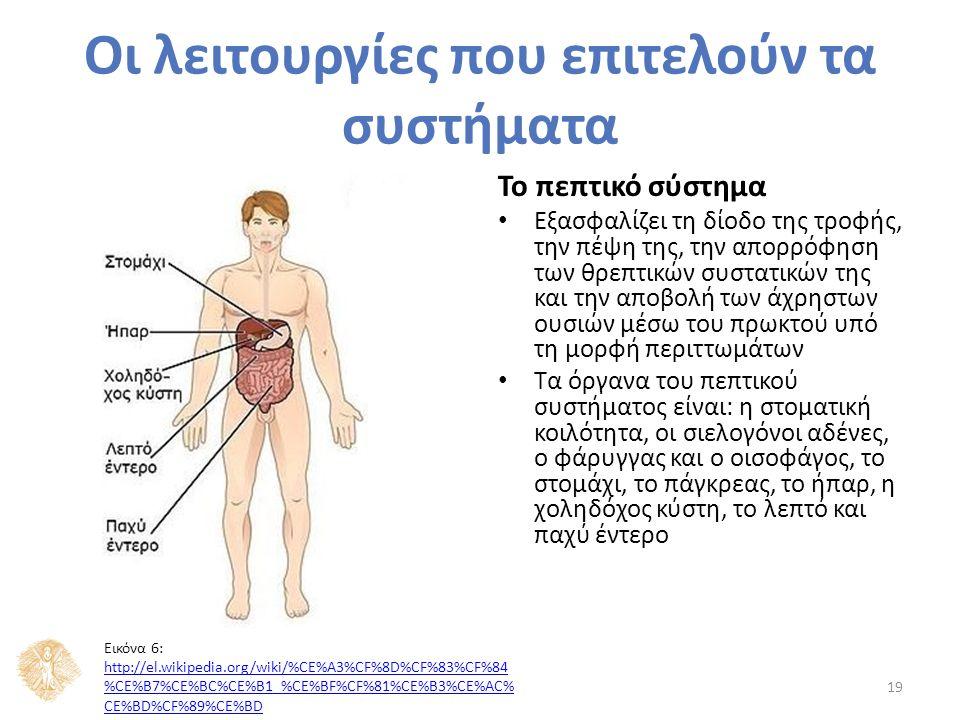 Το πεπτικό σύστημα Εξασφαλίζει τη δίοδο της τροφής, την πέψη της, την απορρόφηση των θρεπτικών συστατικών της και την αποβολή των άχρηστων ουσιών μέσω του πρωκτού υπό τη μορφή περιττωμάτων Τα όργανα του πεπτικού συστήματος είναι: η στοματική κοιλότητα, οι σιελογόνοι αδένες, ο φάρυγγας και ο οισοφάγος, το στομάχι, το πάγκρεας, το ήπαρ, η χοληδόχος κύστη, το λεπτό και παχύ έντερο 19 Οι λειτουργίες που επιτελούν τα συστήματα Εικόνα 6: http://el.wikipedia.org/wiki/%CE%A3%CF%8D%CF%83%CF%84 %CE%B7%CE%BC%CE%B1_%CE%BF%CF%81%CE%B3%CE%AC% CE%BD%CF%89%CE%BD http://el.wikipedia.org/wiki/%CE%A3%CF%8D%CF%83%CF%84 %CE%B7%CE%BC%CE%B1_%CE%BF%CF%81%CE%B3%CE%AC% CE%BD%CF%89%CE%BD
