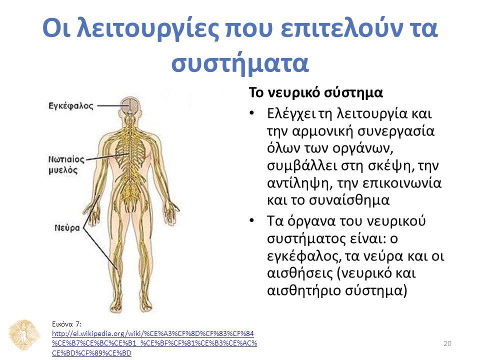 Το νευρικό σύστημα Ελέγχει τη λειτουργία και την αρμονική συνεργασία όλων των οργάνων, συμβάλλει στη σκέψη, την αντίληψη, την επικοινωνία και το συναίσθημα Τα όργανα του νευρικού συστήματος είναι: ο εγκέφαλος, τα νεύρα και οι αισθήσεις (νευρικό και αισθητήριο σύστημα) 20 Οι λειτουργίες που επιτελούν τα συστήματα Εικόνα 7: http://el.wikipedia.org/wiki/%CE%A3%CF%8D%CF%83%CF%84 %CE%B7%CE%BC%CE%B1_%CE%BF%CF%81%CE%B3%CE%AC% CE%BD%CF%89%CE%BD http://el.wikipedia.org/wiki/%CE%A3%CF%8D%CF%83%CF%84 %CE%B7%CE%BC%CE%B1_%CE%BF%CF%81%CE%B3%CE%AC% CE%BD%CF%89%CE%BD