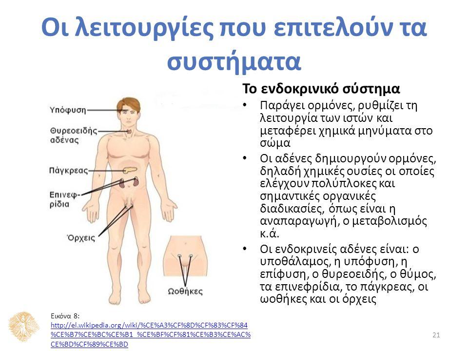 Το ενδοκρινικό σύστημα Παράγει ορμόνες, ρυθμίζει τη λειτουργία των ιστών και μεταφέρει χημικά μηνύματα στο σώμα Οι αδένες δημιουργούν ορμόνες, δηλαδή χημικές ουσίες οι οποίες ελέγχουν πολύπλοκες και σημαντικές οργανικές διαδικασίες, όπως είναι η αναπαραγωγή, ο μεταβολισμός κ.ά.