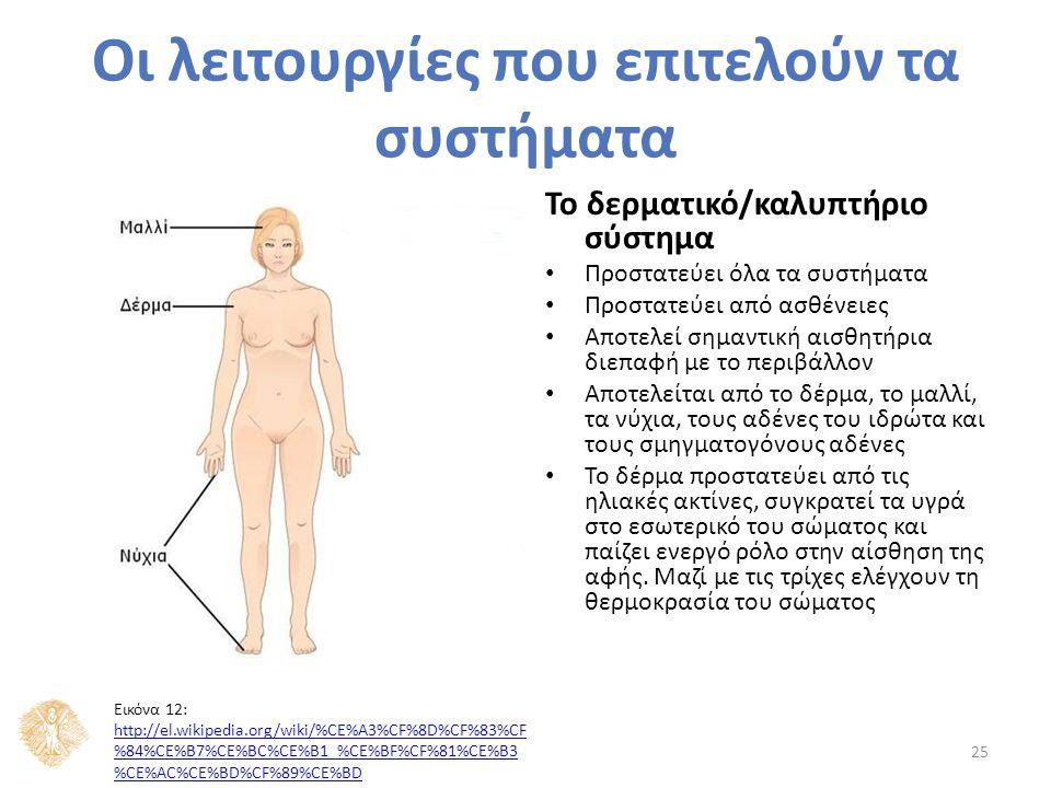 Το δερματικό/καλυπτήριο σύστημα Προστατεύει όλα τα συστήματα Προστατεύει από ασθένειες Αποτελεί σημαντική αισθητήρια διεπαφή με το περιβάλλον Αποτελείται από το δέρμα, το μαλλί, τα νύχια, τους αδένες του ιδρώτα και τους σμηγματογόνους αδένες Το δέρμα προστατεύει από τις ηλιακές ακτίνες, συγκρατεί τα υγρά στο εσωτερικό του σώματος και παίζει ενεργό ρόλο στην αίσθηση της αφής.