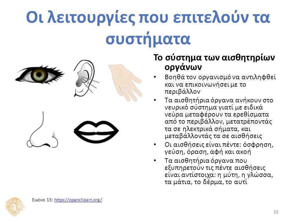 Το σύστημα των αισθητηρίων οργάνων Βοηθά τον οργανισμό να αντιληφθεί και να επικοινωνήσει με το περιβάλλον Τα αισθητήρια όργανα ανήκουν στο νευρικό σύστημα γιατί με ειδικά νεύρα μεταφέρουν τα ερεθίσματα από το περιβάλλον, μετατρέποντάς τα σε ηλεκτρικά σήματα, και μεταβάλλοντάς τα σε αισθήσεις Οι αισθήσεις είναι πέντε: όσφρηση, γεύση, όραση, αφή και ακοή Τα αισθητήρια όργανα που εξυπηρετούν τις πέντε αισθήσεις είναι αντίστοιχα: η μύτη, η γλώσσα, τα μάτια, το δέρμα, το αυτί 26 Οι λειτουργίες που επιτελούν τα συστήματα Εικόνα 13: https://openclipart.org/https://openclipart.org/