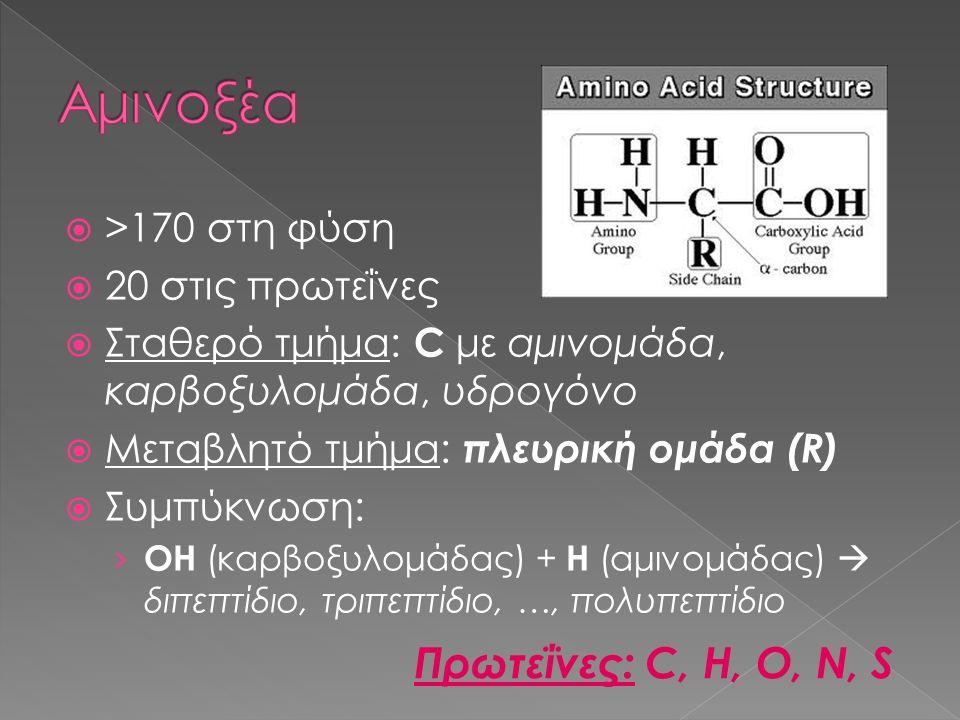  >170 στη φύση  20 στις πρωτεΐνες  Σταθερό τμήμα: C με αμινομάδα, καρβοξυλομάδα, υδρογόνο  Μεταβλητό τμήμα: πλευρική ομάδα (R)  Συμπύκνωση: › ΟΗ