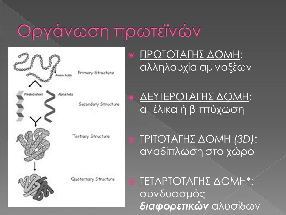  ΠΡΩΤΟΤΑΓΗΣ ΔΟΜΗ: αλληλουχία αμινοξέων  ΔΕΥΤΕΡΟΤΑΓΗΣ ΔΟΜΗ: α- έλικα ή β-πτύχωση  ΤΡΙΤΟΤΑΓΗΣ ΔΟΜΗ (3D): αναδίπλωση στο χώρο  ΤΕΤΑΡΤΟΤΑΓΗΣ ΔΟΜΗ*: συ