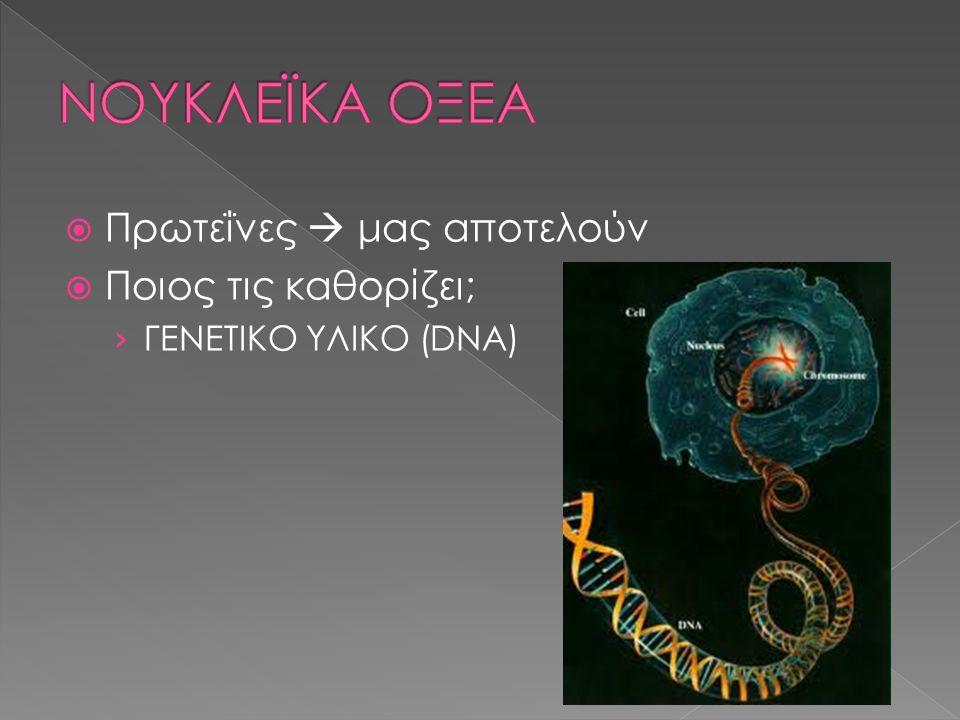  Πρωτεΐνες  μας αποτελούν  Ποιος τις καθορίζει; › ΓΕΝΕΤΙΚΟ ΥΛΙΚΟ (DNA)