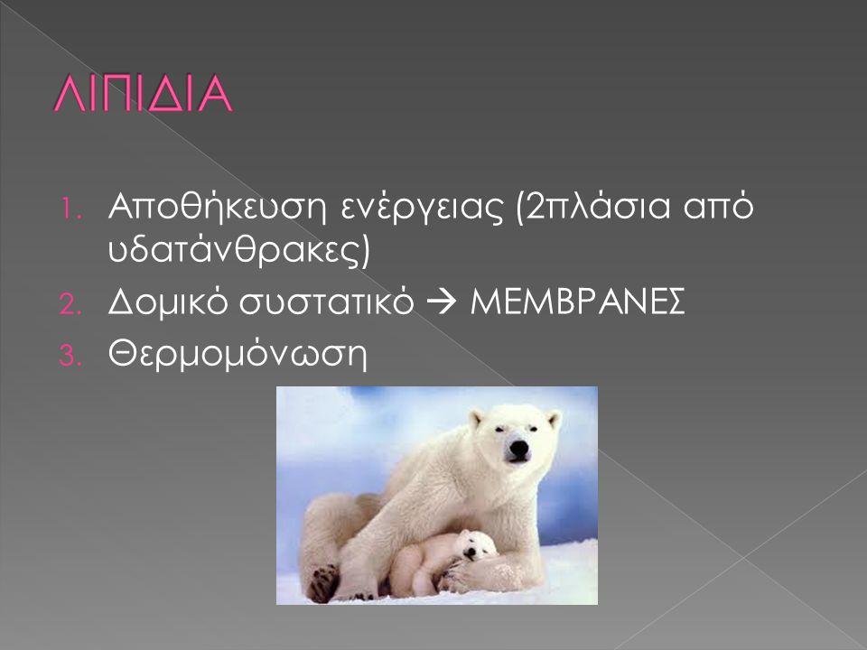 1. Αποθήκευση ενέργειας (2πλάσια από υδατάνθρακες) 2. Δομικό συστατικό  ΜΕΜΒΡΑΝΕΣ 3. Θερμομόνωση