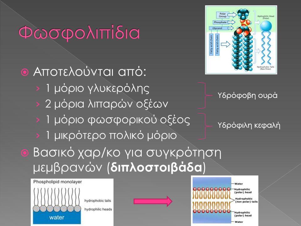  Αποτελούνται από: › 1 μόριο γλυκερόλης › 2 μόρια λιπαρών οξέων › 1 μόριο φωσφορικού οξέος › 1 μικρότερο πολικό μόριο  Βασικό χαρ/κο για συγκρότηση
