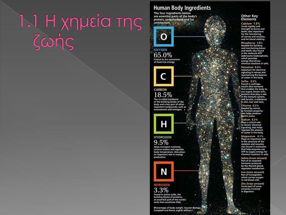 Δεοξυριβονουκλεοτίδια ( DNA) Ριβονουκλεοτίδια ( RNA)  Φωσφορική ομάδα  Πεντόζη ( δεοξυριβόζη )  Αζωτούχος βάση › Αδενίνη (A) › Γουανίνη (G) › Κυτοσίνη (C) › Θυμίνη (T)  Φωσφορική ομάδα  Πεντόζη ( ριβόζη )  Αζωτούχος βάση › Αδενίνη (A) › Γουανίνη (G) › Κυτοσίνη (C) › Ουρακίλη (U) Νουκλεϊκά οξέα: C, H, O, N, P