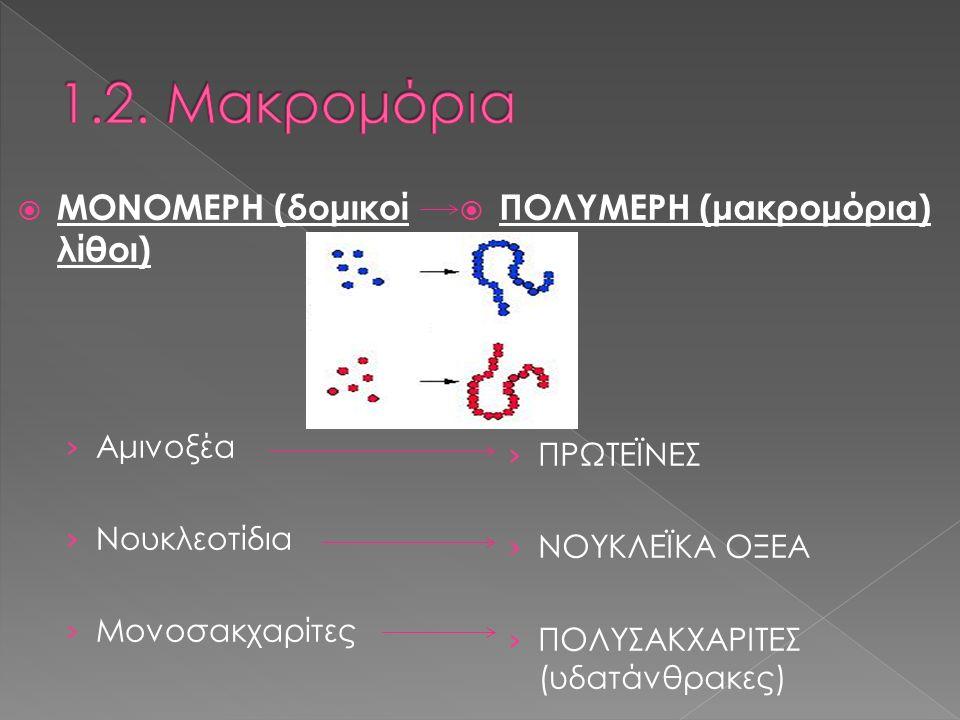  2 πολυνουκλεοτιδικές αλυσίδες  Αζωτούχες βάσεις εσωτερικά  2 αλυσίδες συγκρατούνται με δεσμούς H (συμπληρωματικές) › A = T › G Ξ C  Γενετικό υλικό › Γενετικές πληροφορίες › Μεταβίβαση  Πυρήνας – μιτοχόνδρια – χλωροπλάστες