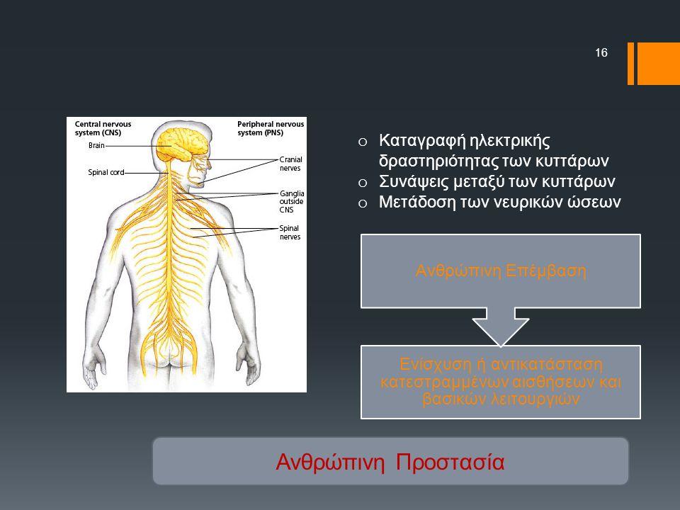16 o Καταγραφή ηλεκτρικής δραστηριότητας των κυττάρων o Συνάψεις μεταξύ των κυττάρων o Μετάδοση των νευρικών ώσεων Ενίσχυση ή αντικατάσταση κατεστραμμένων αισθήσεων και βασικών λειτουργιών Ανθρώπινη Επέμβαση Ανθρώπινη Προστασία