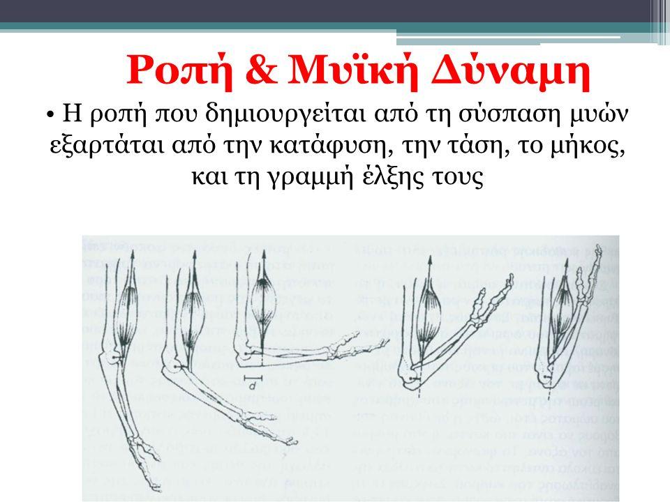 Ροπή & Μυϊκή Δύναμη Η ροπή που δημιουργείται από τη σύσπαση μυών εξαρτάται από την κατάφυση, την τάση, το μήκος, και τη γραμμή έλξης τους