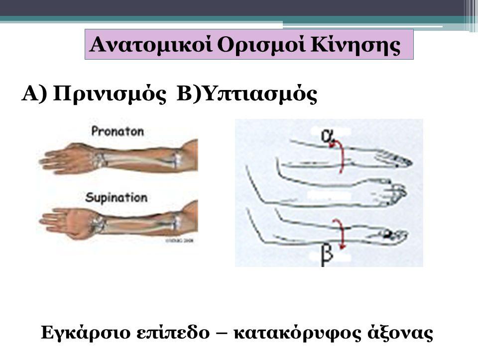 Ανατομικοί Ορισμοί Κίνησης Α) Πρινισμός Β)Υπτιασμός Εγκάρσιο επίπεδο – κατακόρυφος άξονας