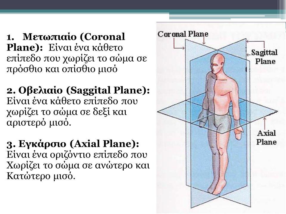 Οβελιαίος ή Προσθιοπίσθιος άξονας: Ο άξονας αυτός τέμνει κάθετα το μετωπιαίο επίπεδο Πρόσθιος ή Μετωπιαίος άξονας: Ο άξονας τέμνει κάθετα το οβελιαίο επίπεδο.