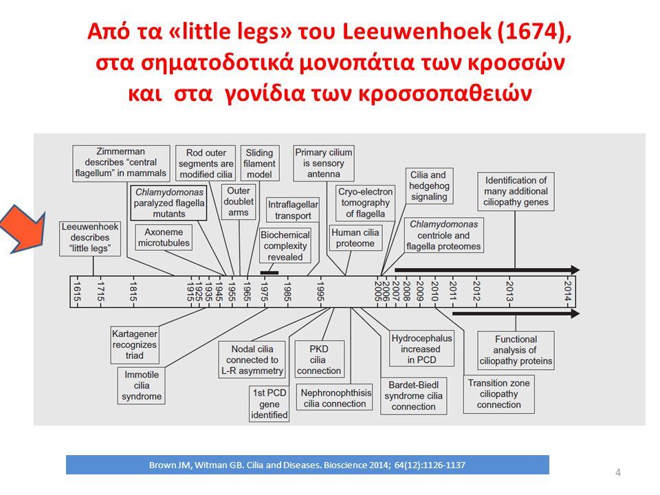 Οι νεφροκυστίνες 1-9 και η εντόπιση της βλάβης στις διάφορες κροσσοπάθειες 25 Hildebrandt F, Attanasio M, Otto E.